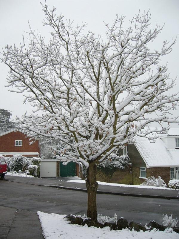 snow06apr08_12