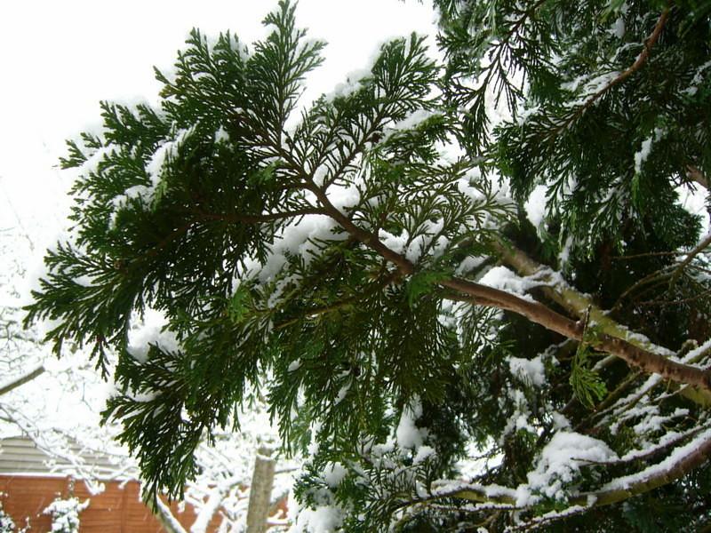 snow06apr08_15