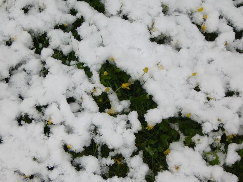 snow06apr08_21