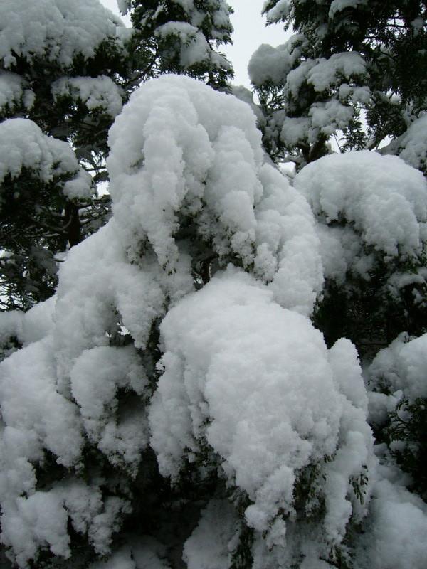snow06apr08_23