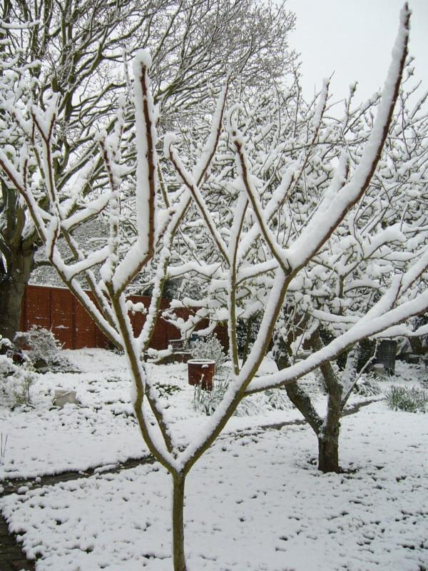 snow06apr08_27