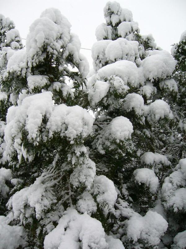 snow06apr08_28
