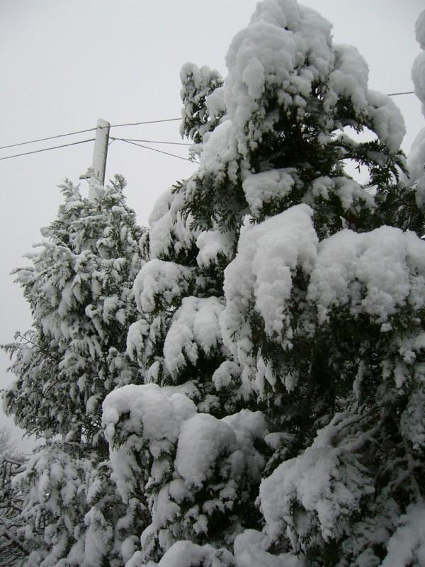 snow06apr08_29