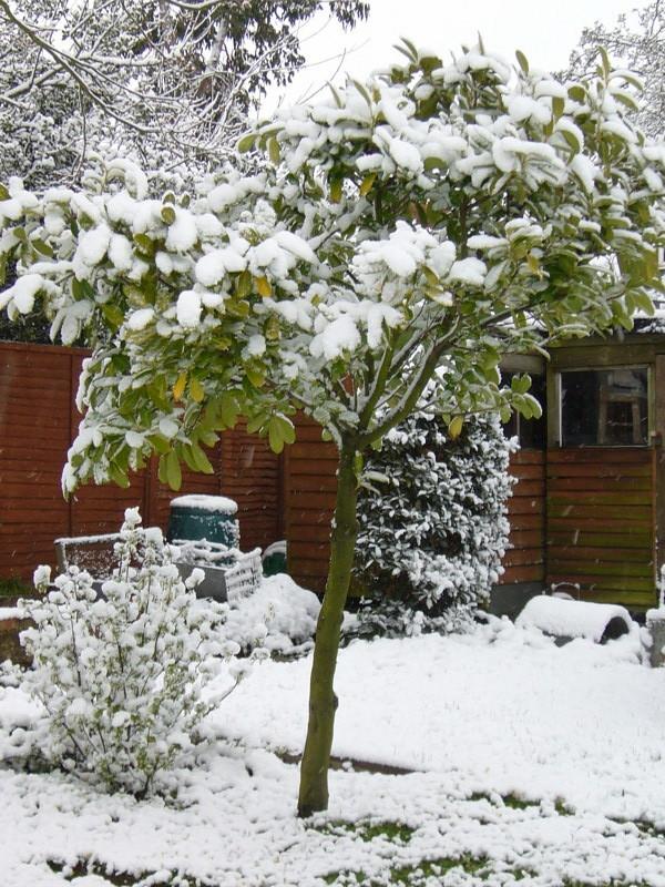 snow06apr08_34