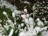 snow06apr08_04