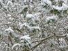 snow06apr08_05