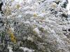 snow06apr08_06