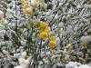 snow06apr08_07