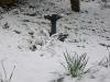 snow06apr08_13