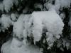 snow06apr08_24