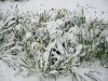 snow06apr08_35