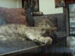 Sleepymog