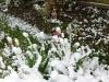 snow06apr08_03